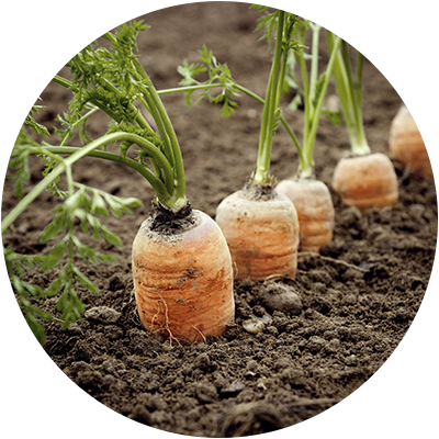 Soil Protects